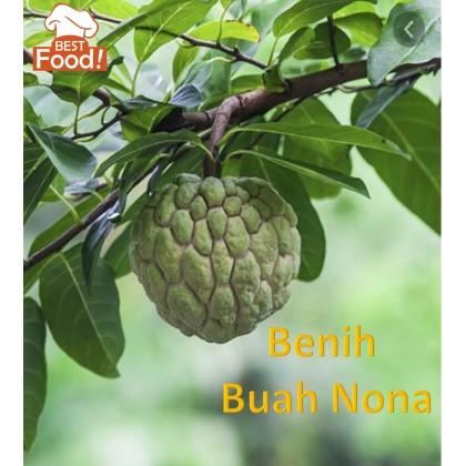 (15 Seeds) Nona Seeds / Benih Buah Nona